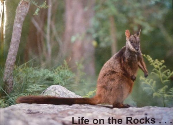Life On The Rock Photo Book