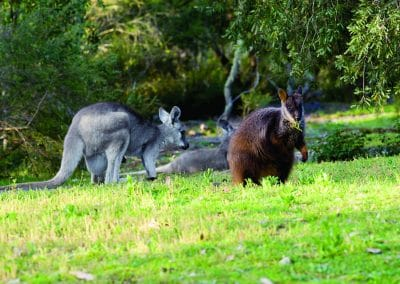 btrw-with-wallaroo-1